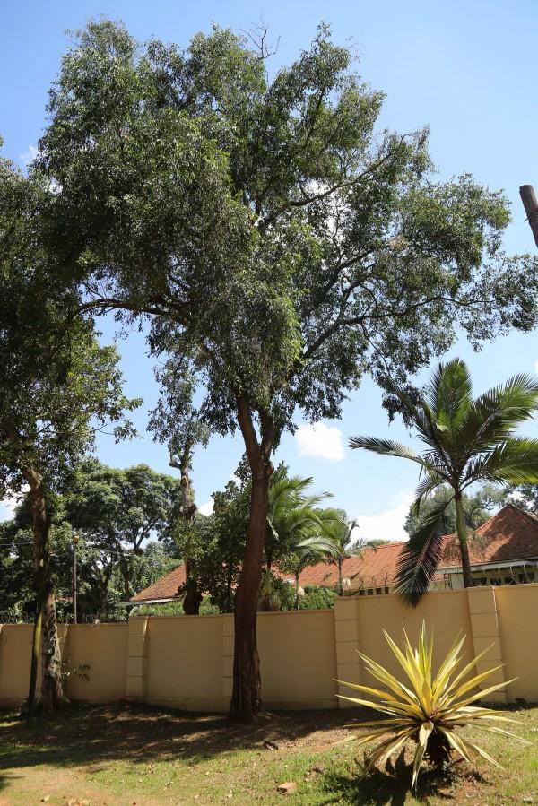 Kampala Tree and Palm Directory